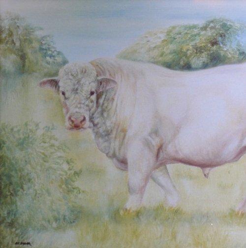 Charolais Bull Portrait in Oils