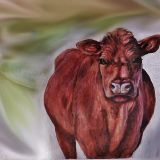 Lincoln Red Cow