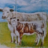 Longhorn Cattle Hand Painted Tiles