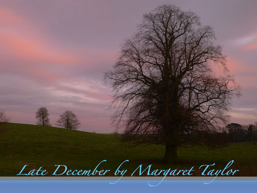 Late December at Dusk