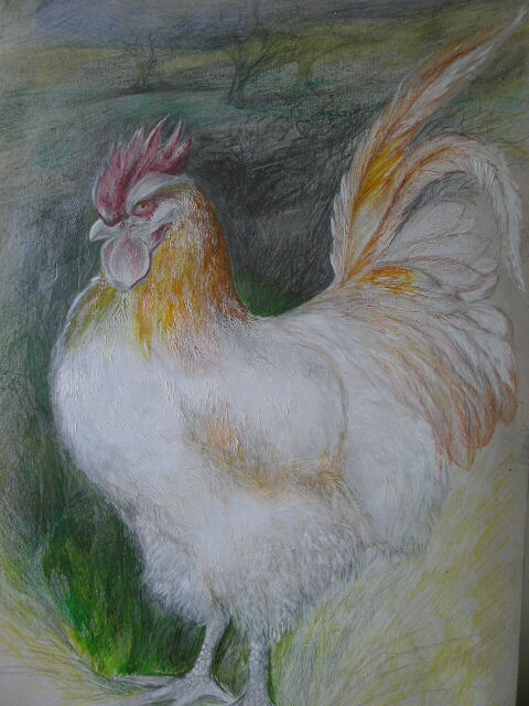 Drawing of Cockerel just before completion.
