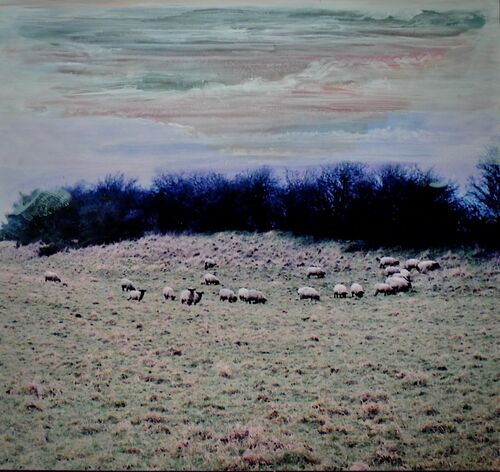 Sheep on the Lincolnshire Wolds