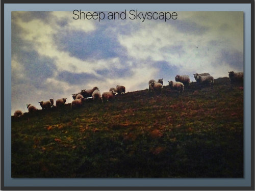 Sheep and Skyscape