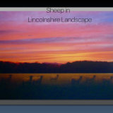 Sheep in Lincolnshire Landscape