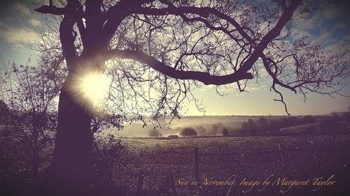 Sun in November