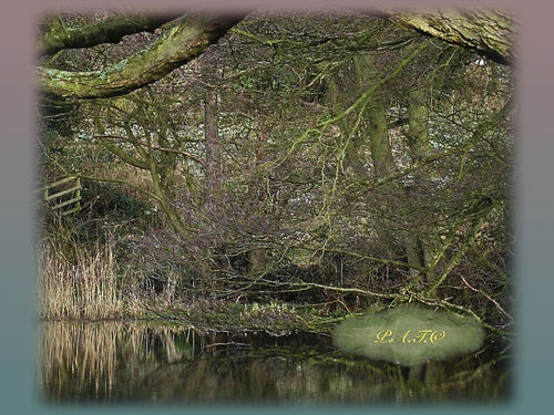 'The Pond' Photo by Phil Taylor