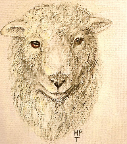 Portraits of Sheep and Farm Animals