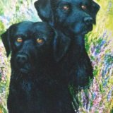 Example of Oil Painting of Dogs