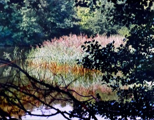 'Reflection' Image by Phil Taylor