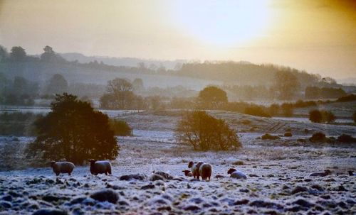 Sheep in the Frost Photograph by Phil Taylor