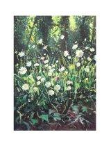 Big Daisys in Hampshire