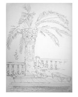 Drawing of a palm tree Formentera