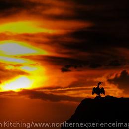 Sunset, Farne Islands