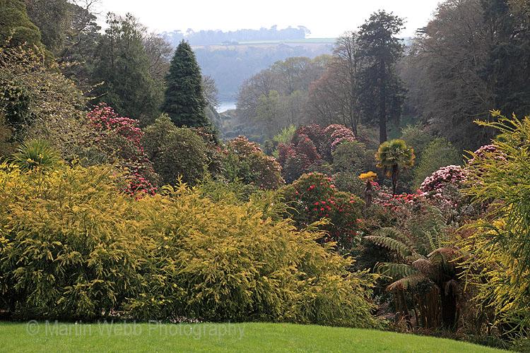 12617A Trebah Gardens
