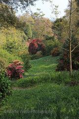 12661A Trebah Gardens