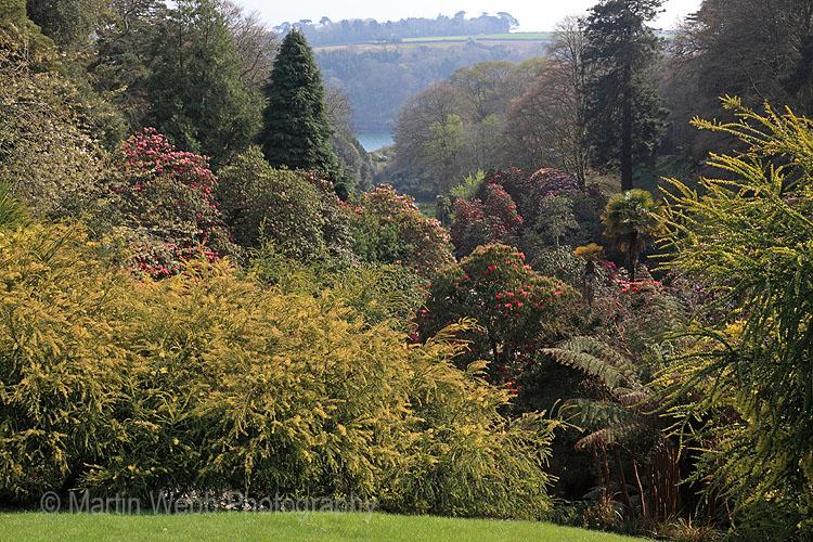 12663A Trebah Gardens