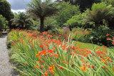 15379A Trebah Gardens