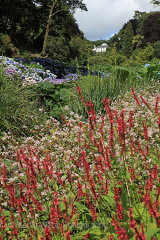 15387A Trebah Gardens