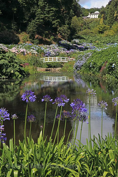 15400A Trebah Gardens