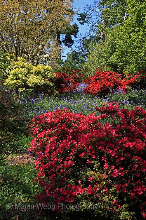 16301A Caerhays Castle Gardens