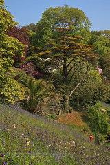 16413A Glendurgan Gardens