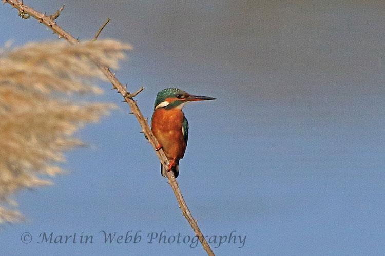 32411AC Kingfisher