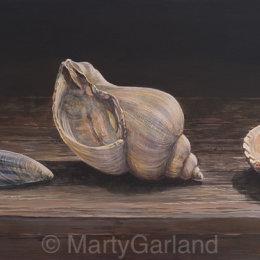 3 Seashells