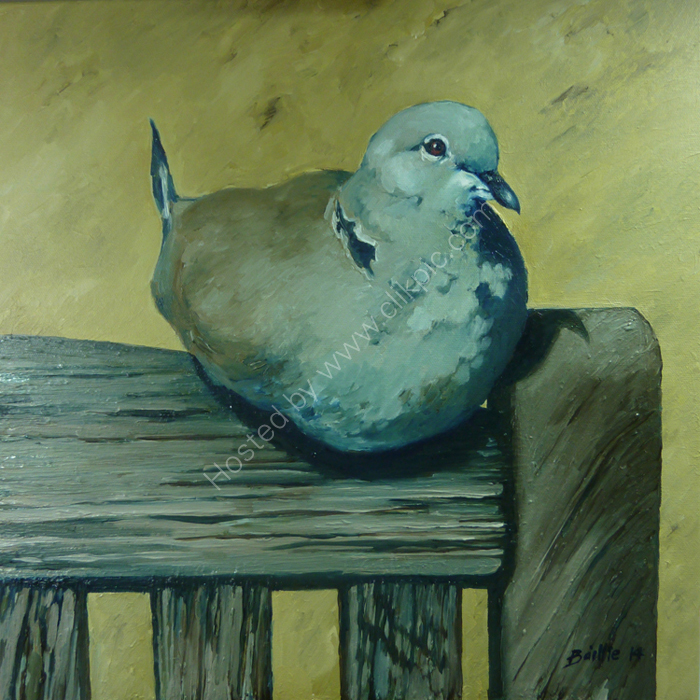 Collared dove on bench