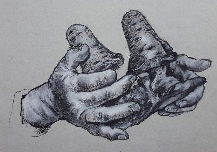 Hand study no 4