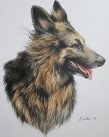 Kara, the German Shepherd