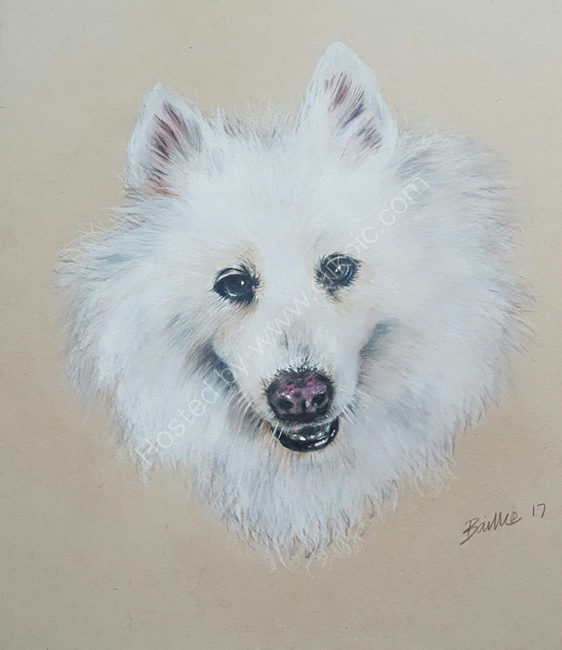 Ruffy, the samoyed