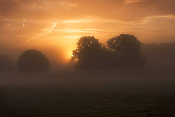 Sunrise in Richmond Park