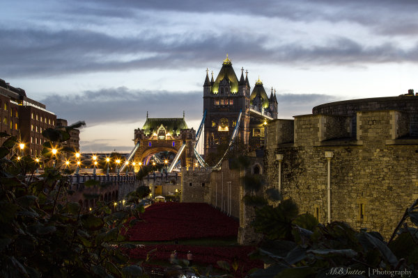 Tower Bridge & Poppies