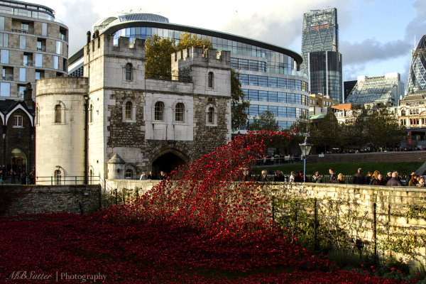 Tower and Poppy Waterfall, City