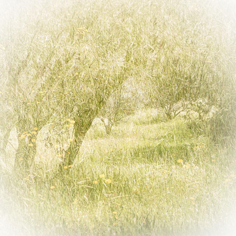 Olive Grove, Provence