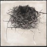 Sarah Gillespie - Bird Nest Study