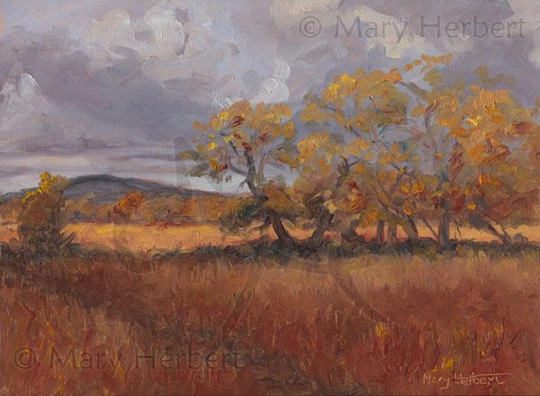 Cors Caron, Autumn 1