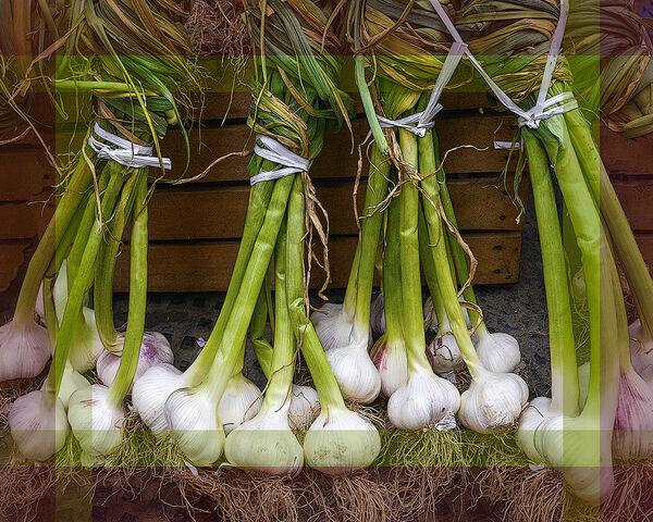 Garlic Stems