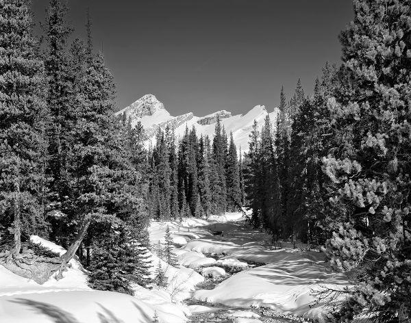 Jasper Stream