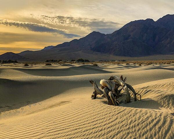 Sand Swept