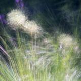Allium Movement