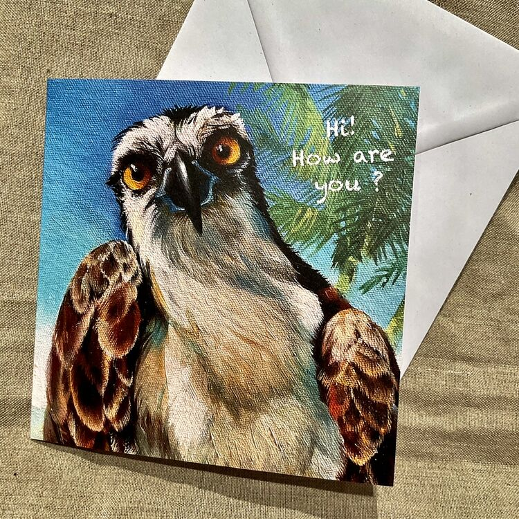 Osprey from Florida greeting card, hi, how are you? Free UK definitely