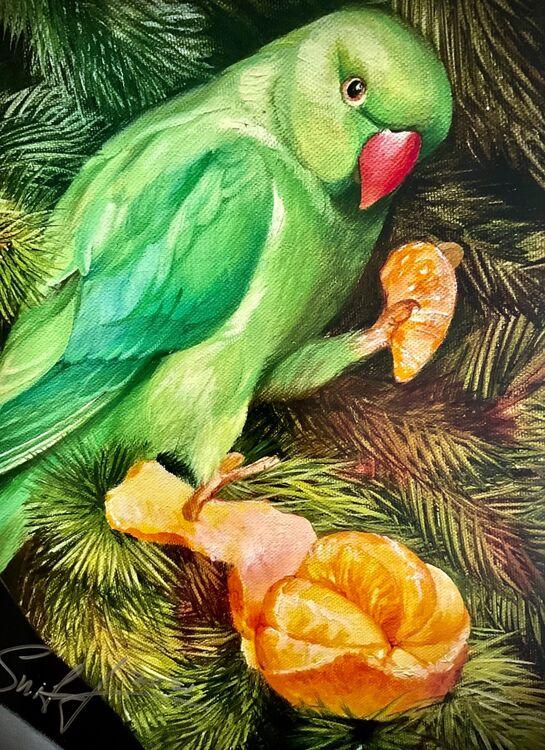 Green parrot green parakeet eating mandarin