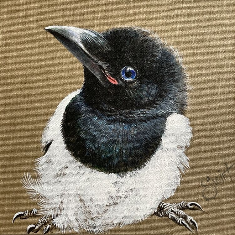 Cute Baby magpie with blue eyes on natural linen canvas
