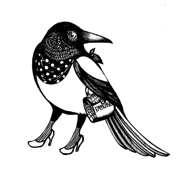 Fashionable Magpie
