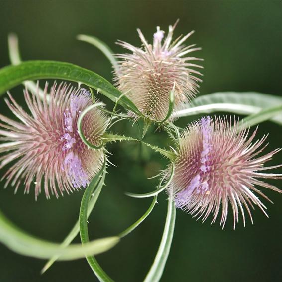Botanicart 6