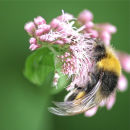 Spinbee