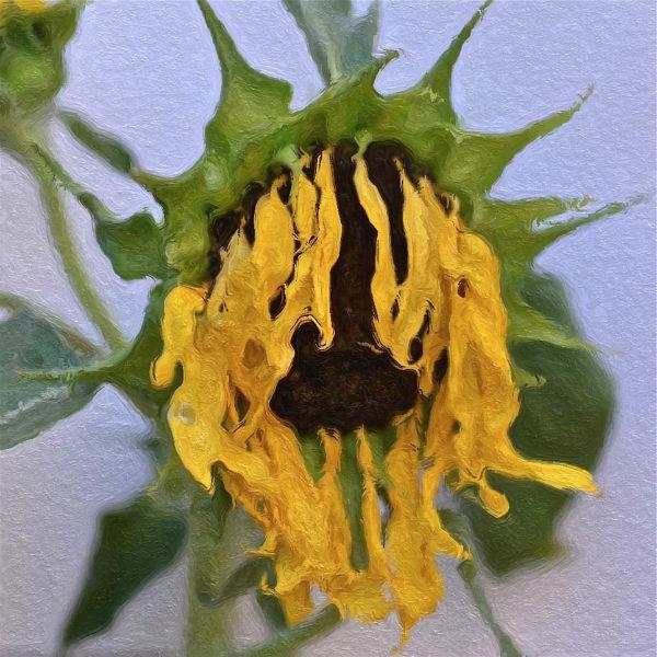 botanicart 004