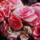 botanicart 006