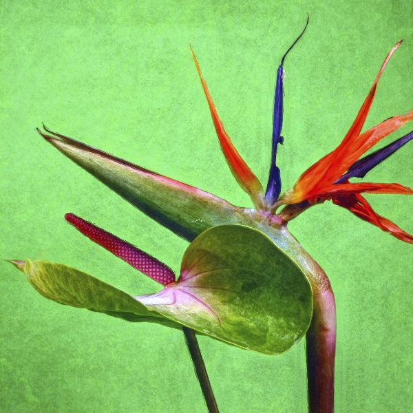 botanicart 82